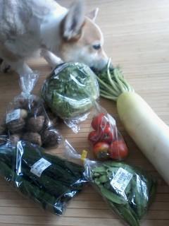 朝とり野菜