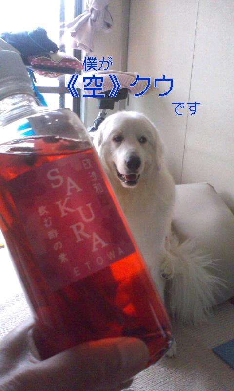 《さくら飲む酢》完成