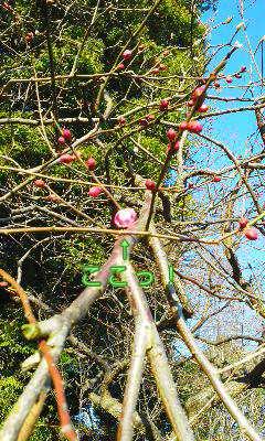 春だなぁ〜